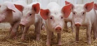 Midwest Swine Nutrition Conference - 2011